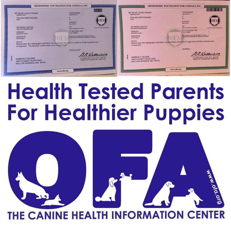 news, article, kim, dildine, dog, breeder, kim-dildine, kim dildine breeder, starbreeder, dog-breeder, willow, springs, mo, missouri, aphis, inspection, record, grey, hound, greyhound, puppy, mill, pu