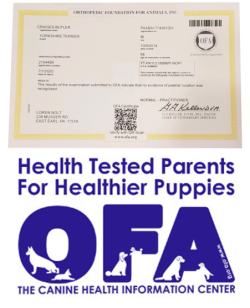 ofa, news, article, loren, nolt, dog, breeder, east, earl, loren-nolt, dog-breeder, east-earl, kennel, usda, pa, pennsylvania, puppy, mill, puppymill, mnpba, inspected, inspection, report, reports, in