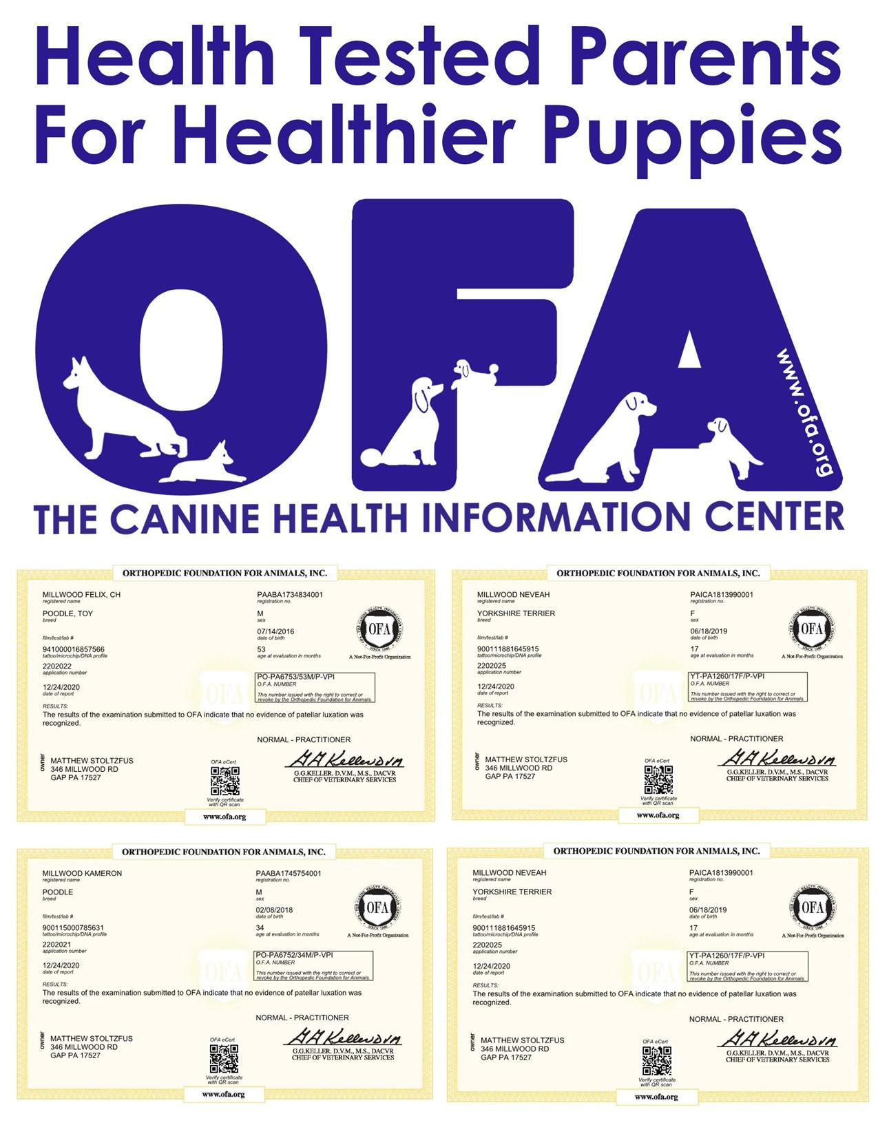 news, article, matthew, stoltzfus, dog, breeder, matthew-stoltzfus, dog-breeder, starbreeder, dog-breeder, gap, pa, pennsylvnia, aphis, inspection, record, grey, hound, greyhound, puppy, mill, puppymill, usda