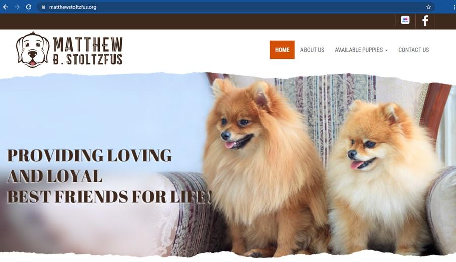 Matthew Stoltzfus Dog Breeder Home Page
