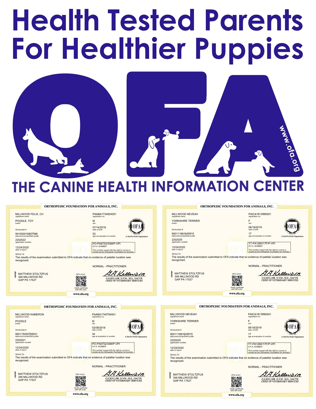 News Investigations of Millwood Puppies Kennels Report Article