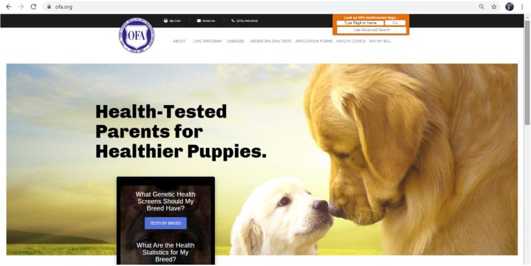philip, chupp, dog, breeder, ofa3, philip-chupp, dog_breeder, kennel, star breeder, star breeder, 5