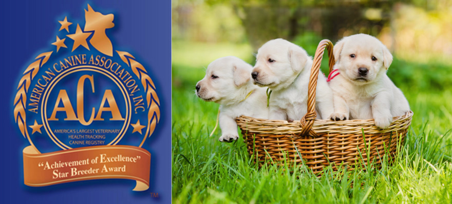 ACA News - American Canine Association awards